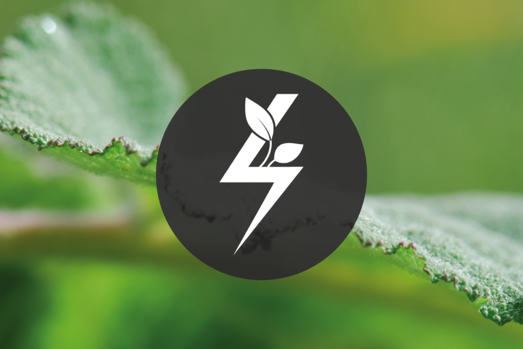 Albert Vieille passe à l'énergie verte