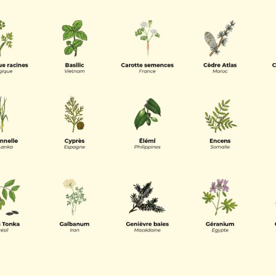 Calendrier des récoltes de septembre