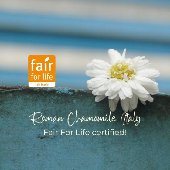 Our historical Italian Roman Chamomile supply chain certified Fair For Life, forty years of partnership rewarded.