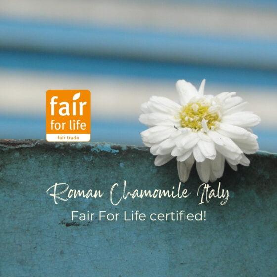 Notre filière historique de camomille Romaine Italie labellisée Fair For Life, 40 années de partenariat récompensées.