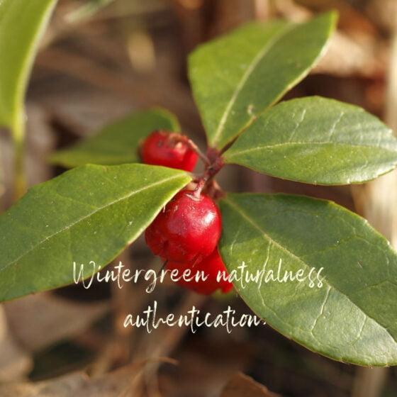 Etude sur l'authentification du Wintegreen présentée à Aromadays